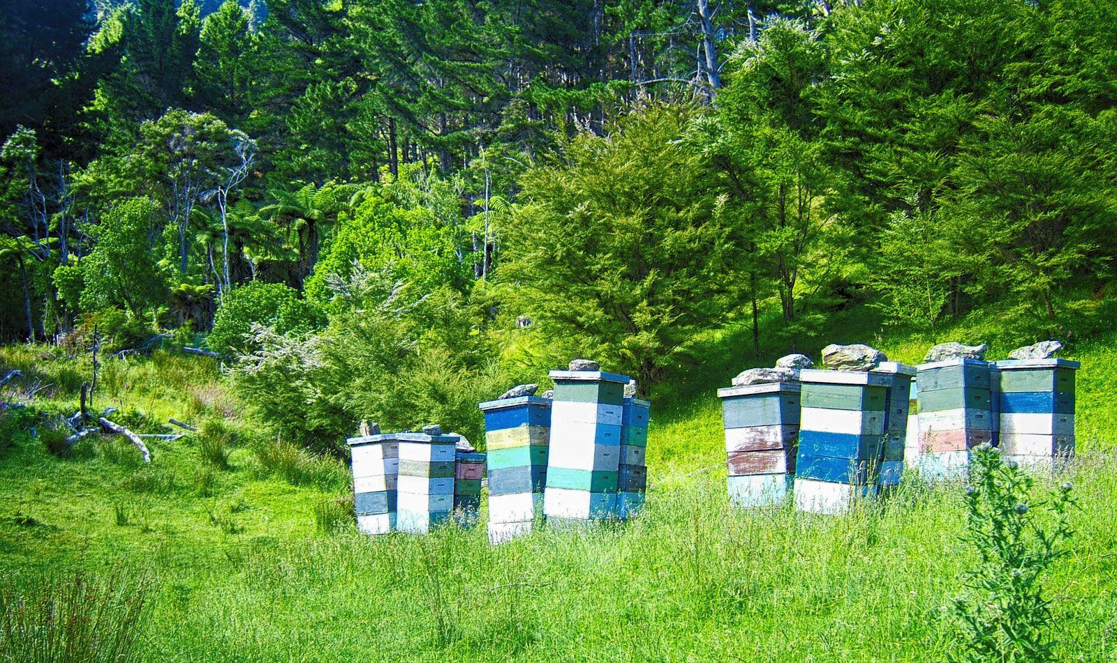 NZ-Beeswax-Beehives-Kenepuru