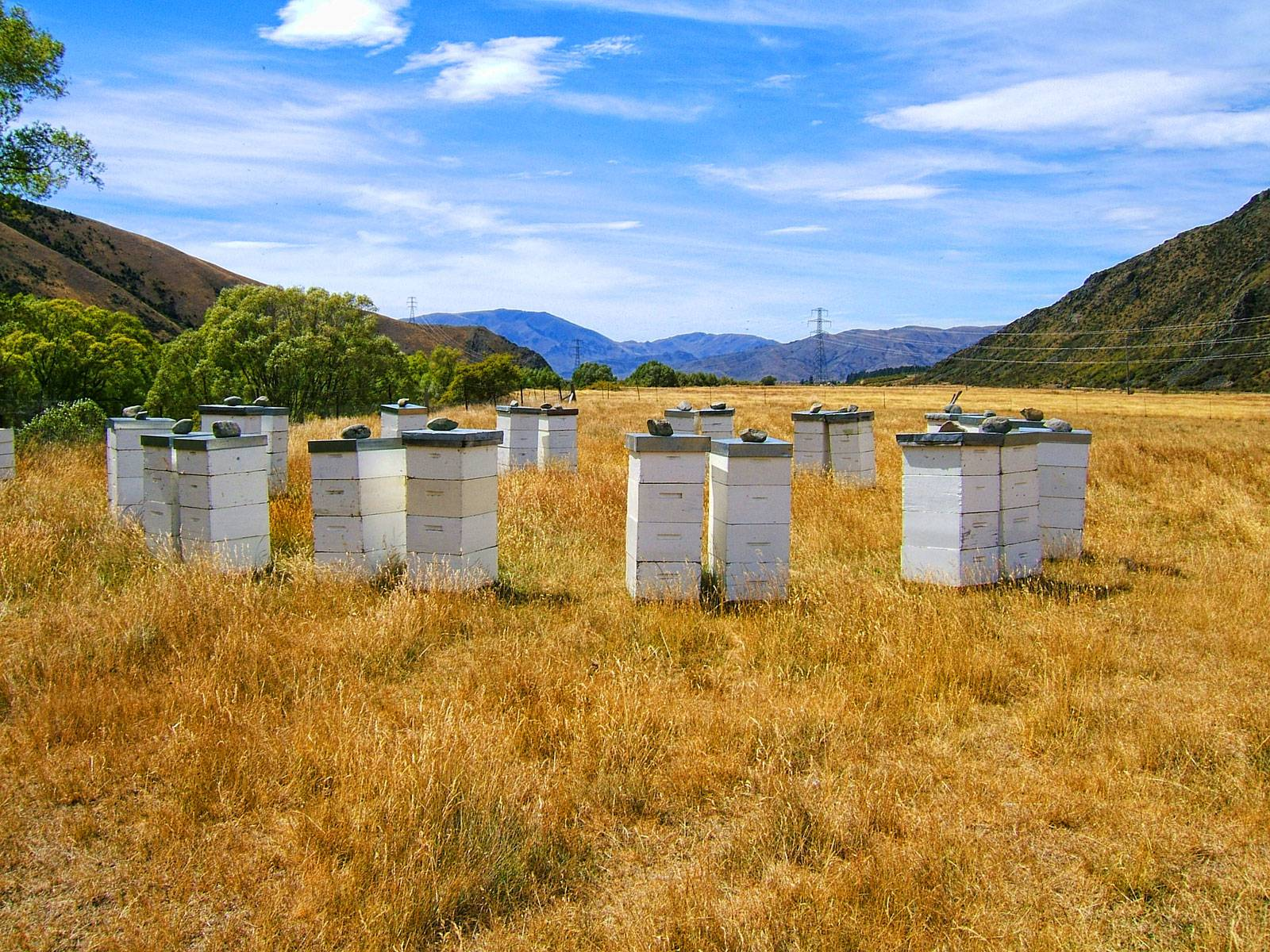 NZ-Beeswax-Beehives