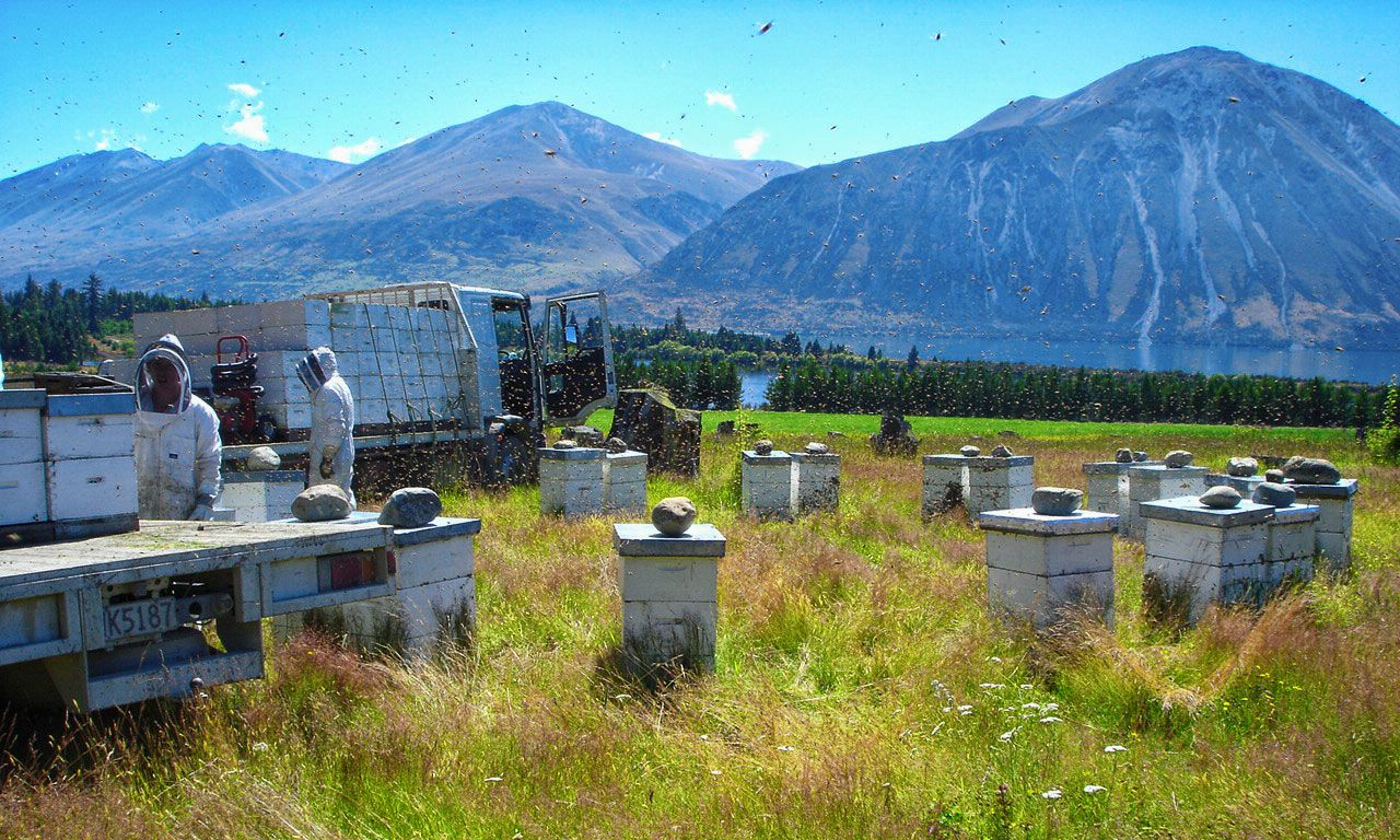 New-Zealand-Beeswax-beehives